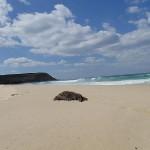 Kawasaki Vulcan Nomad_Frazer Beach Day Ride_Birdie Beach
