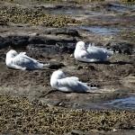 Newcastle Beach Day Ride_Newcastle Beach_Seagulls