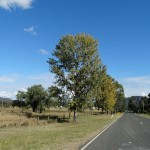 McNamara Park Day Ride_Broke
