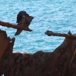 Shipwreck Walk, Stockon Beach Day Ride_Shipwreck Walk_Adolphe