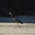 Birdie Beach Day Ride_Birdie Beach