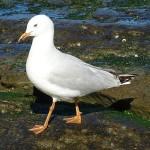 Birdie Beach Day Ride_Birdie Beach_Seagull