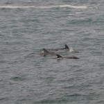 Birubi Point Day Ride_Boat Harbour_Dolphins